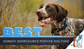 German Shorthaired Pointer Puppy Weight Chart 6 Best German Shorthaired Pointer Dog Food Top Puppies