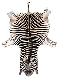 zebra hide rug real rugs info fake skin uk in prepare 11