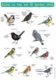 Handy Guide To The Uks Top 10 Garden Birds Eco Kids Planet