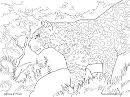 Small Picture Large Cat Coloring Pages Coloring Coloring Pages