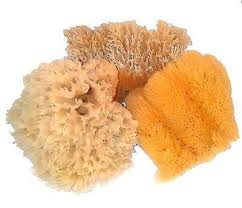 Choosing the Right Sea Sponge for Faux Painting: Wool, Grass or Cultured?
