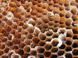 dry honeycomb