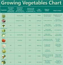 Vegetable Sunlight Requirement Chart Parsimonious Swank Vegetable Growing Chart