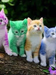 cats cute hd photos 1080p cats hd photos wallpapers hd