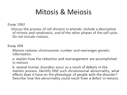 "lab review ""the dirty dozen"" ppt video online  24 mitosis meiosis essay"