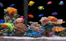 real underwater world. Contemporary World This Is The App Of Highquality Underwater World  Aquarium  The Most  Beautiful Live Wallpaper Colorful Fish And Plants Throughout Real Underwater World