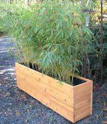 office planter boxes. Tall Bamboo Rectangular Planter Google Search Privacy Boxes Faux Glass Screen With Office Entry