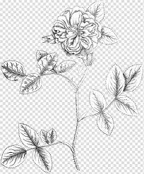 Floral Design Botany Botanical Illustration Flower Damask