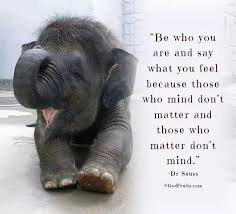 Elephant Quotes Best Funniest Elephant Quotes MOST FUNNIEST ELEPHANT QUOTES Pinterest