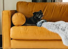 Image Sectional The Ultimate Petfriendly Sofa Article Tips For Choosing Petfriendly Furniture Articulate