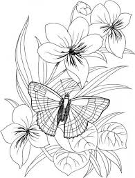 Small Picture Butterfly Flower Coloring Pages Kleurplaat Pinterest