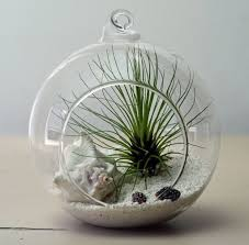 Lovely Terrarium Plants With Decorative White Shell