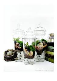 Large Decorative Jars Terrarium Set 100 Large Decorative Apothecary Jar Terrariums 14