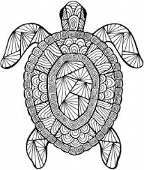 Small Picture Detailed Sea Turtle Advanced Coloring Page A to Z Teacher Stuff