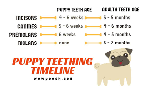 Puppy Teething Age Chart How To Deal With Your Puppy Teething And Nipping Wowpooch