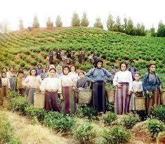 <b>Грузинский чай</b> — Википедия