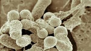 Селекция микроорганизмов Командой европейских ученых была доказана возможность миграции микроорганизмов на большие расстояния