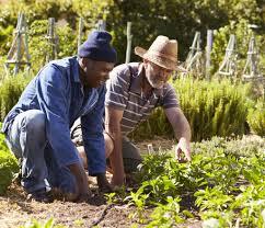 how do your community gardens grow