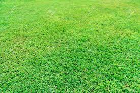 grass field background. Fresh Green Grass Field Background Texture Stock Photo - 12353592
