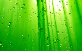 cool collections ofhd lime green backgrounds for desktop laptop and mobiles here you can more than 5 million photography collections uploaded by