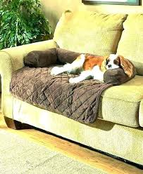 best leather sofa dogs dog couch couches for get out of wonderful cover co