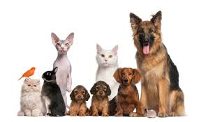 """Résultat de recherche d'images pour """"dogs and cats"""""""