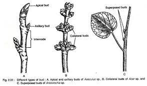 classroom observation essay first grade help esl creative plant structure essay censorship persuasive essay