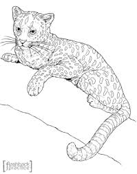 Small Picture Serval Cat Coloring Pages Coloring Pages
