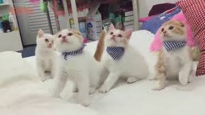 Nhạc thiếu nhi - Chú mèo con meo meo meo - YouTube