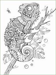 Zwart Wit Lijn Kleurplaten Voor Volwassenen Book Marketing