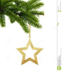 Goldener Weihnachtsstern Auf Dem Grünen Baumast Lokalisiert
