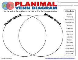 Venn Diagram On Plant And Animal Cells Plant Animal Cell Venn Diagram By Science Teacher Resources Tpt