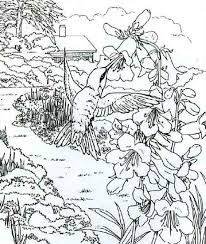 Small Picture Pencil Sketch Of A Hummingbird Coloring Page Pencil Sketch Of A
