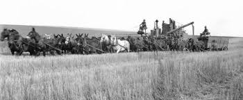 Image result for WHEAT HARVEST WALLA WALLA HISTORY