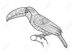 オオハシ鳥大人ベクトル イラストの塗り絵大人のための着色抗ストレスzentangle