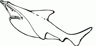 Small Picture Tiger Shark Coloring Pages Perudecom