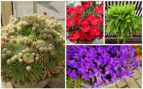 13 best perennials for containers