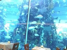 The Chart House Las Vegas Chart House Aquarium Picture Of Chart House Las Vegas