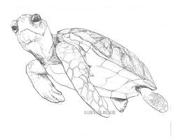 Small Picture 62 best Turtle Illustrations images on Pinterest Sea turtles