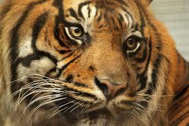 Animals behind bars essay