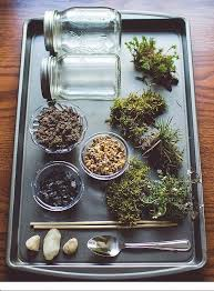 terrarium ings glass vessels decorative stones plants moss activated charcoal