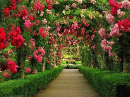 Small Picture 33 best grdening images on Pinterest Flower gardening Beautiful