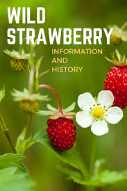 wild strawberry information and history