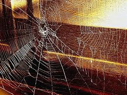 Image result for BROKEN spider web images