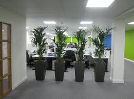 modern office plants. Kentia Palm Plant Screening In Derby DE1 Offices Modern Office Plants N