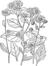 best 25 chrysanthemum morifolium ideas on pinterest Houseplants For Clean Air Houseplants For Clean Air #31 houseplants for cleaner air