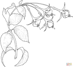 Small Picture Fuchsia 1 coloring page Free Printable Coloring Pages