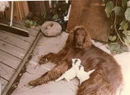 Mitt Romney <b>dog</b> incident - Wikipedia