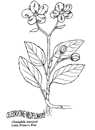 Small Picture Cactus Coloring Page Download Coloring Pages Cactus Coloring Page