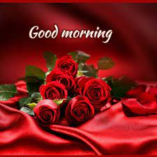 red rose romantic good morning images ...
